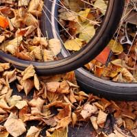 Herbst in Reuterkiez